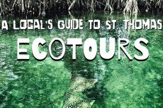 A Local's Guide to St. Thomas: Ecotours