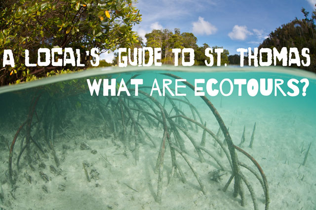 A Local's Guide to St. Thomas: What are Ecotours?