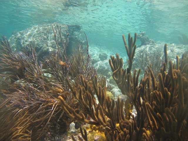 Best St Thomas Snorkeling Spots