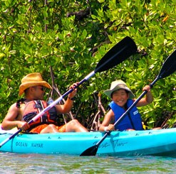 St. Thomas Mangrove Lagoon Snorkeling and Kayaking Tour