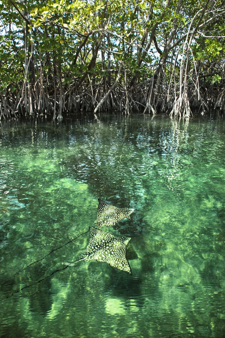 St. Thomas Mangrove Lagoon and Cas Cay Ecotours