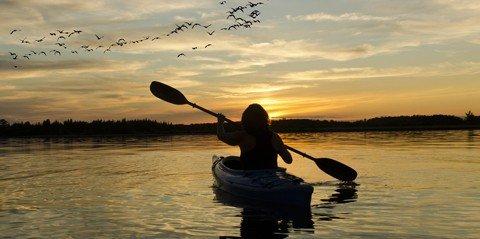 Kayak Ecotour: Bird Island and St. Thomas' Mangrove Lagoon