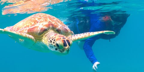 Kayak and Sea Turtle Snorkel Tour with Lunch in St. Thomas