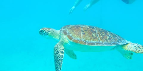 Kayak, Sea Turtle and Reef Snorkel Tour with Lunch in St. Thomas