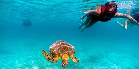 St Thomas Snorkeling Adventure
