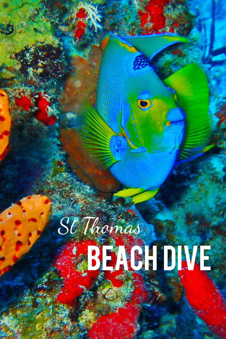 Coki Beach Scuba Dive in St. Thomas