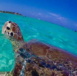 Cruise Ship Friendly - St Thomas Snorkeling with Turtles Adventure with Lunch