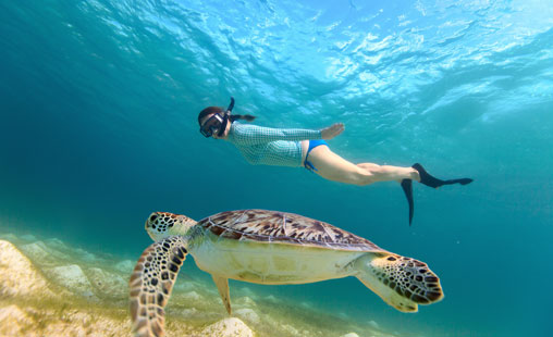 Discover the crystal clear waters and beautiful sea creatures by experiencing St John Snorkeling